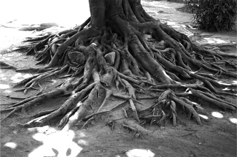 tree-698707_1920